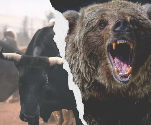 Bull vs bear markets: what's the difference?